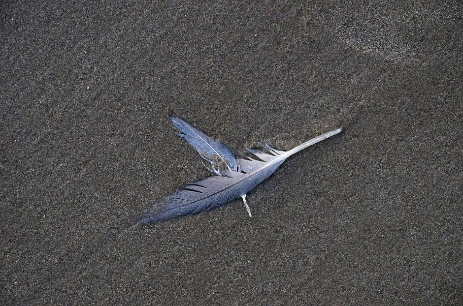 Federn im Sand