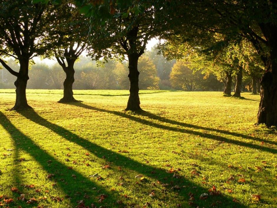 Herbstlicht - (c) Dirk Henkel