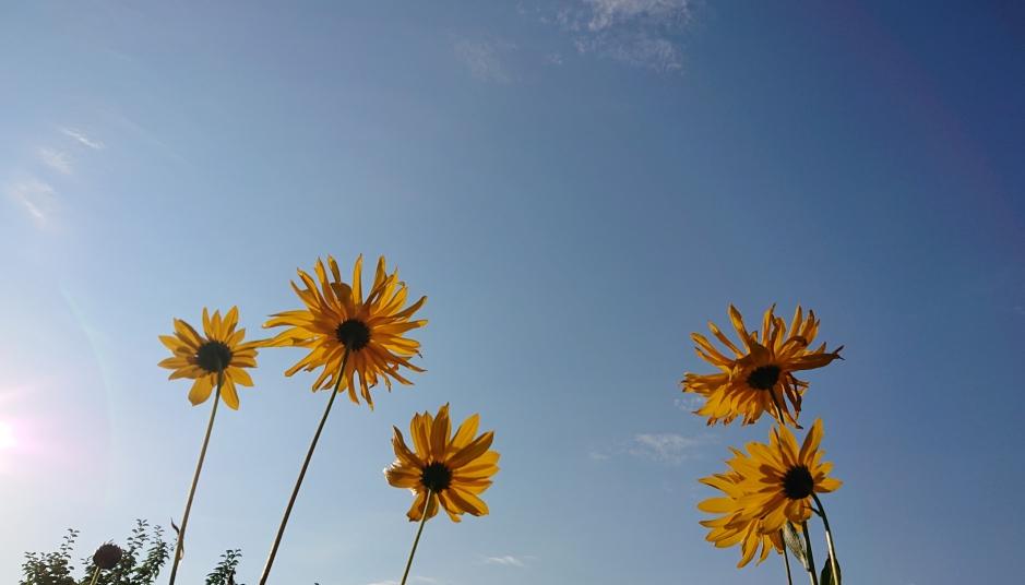 Blumen am Himmel
