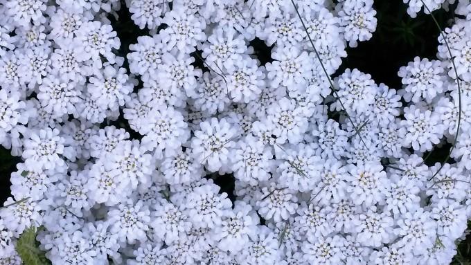 Blumen by Christiane Henkel